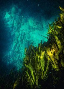 Shallow Depths by Drew Hopper