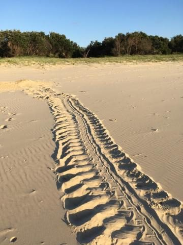 Turtle Tracks by M Phillips